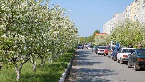 "Микрорайон ""Московский"" засадят яблонями и грушами"
