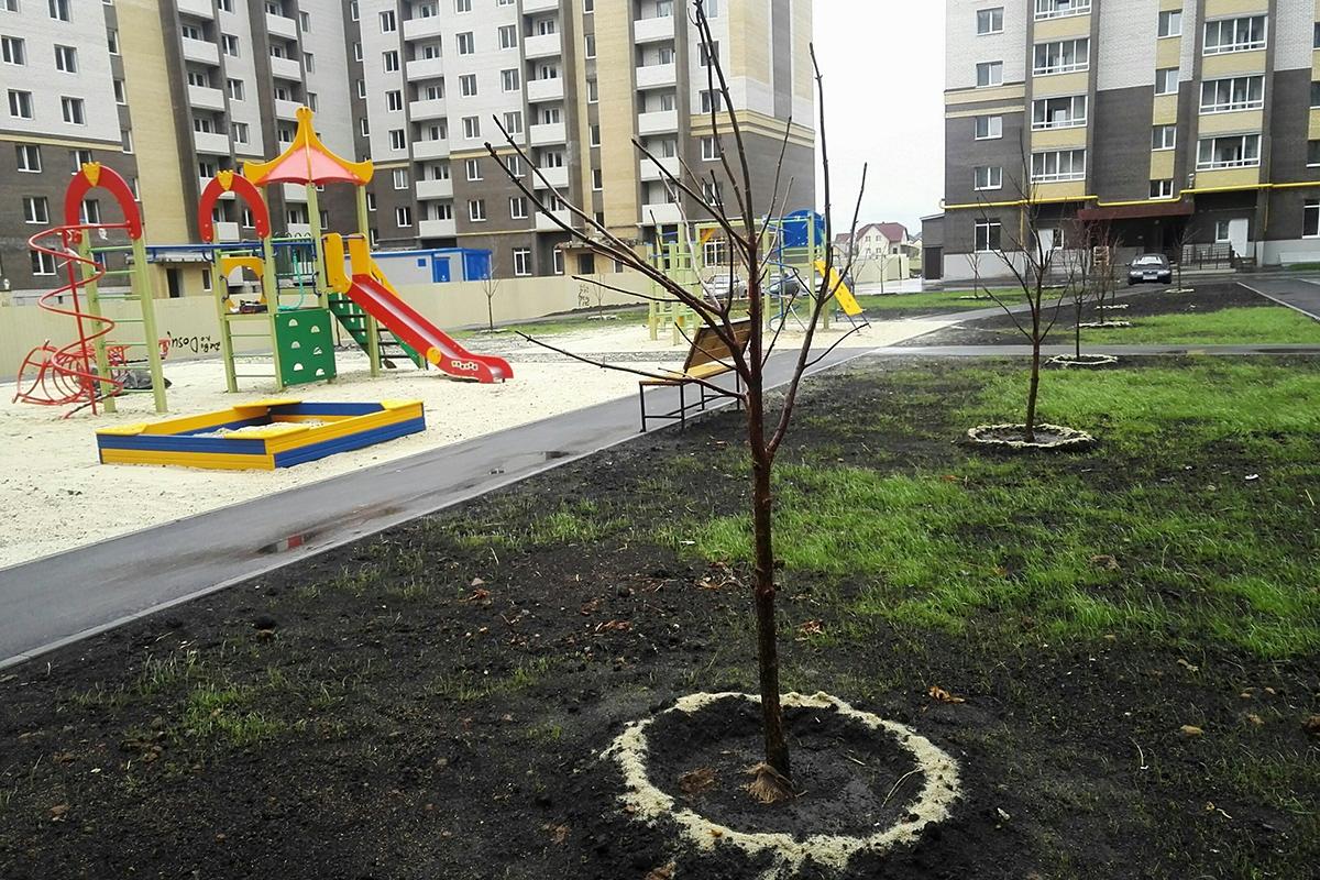 Деревья во дворе