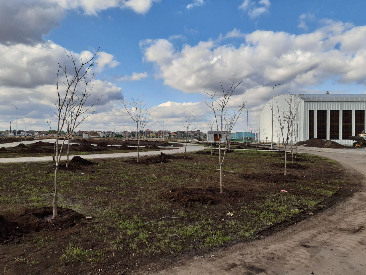 Деревья в Олимпийском парке