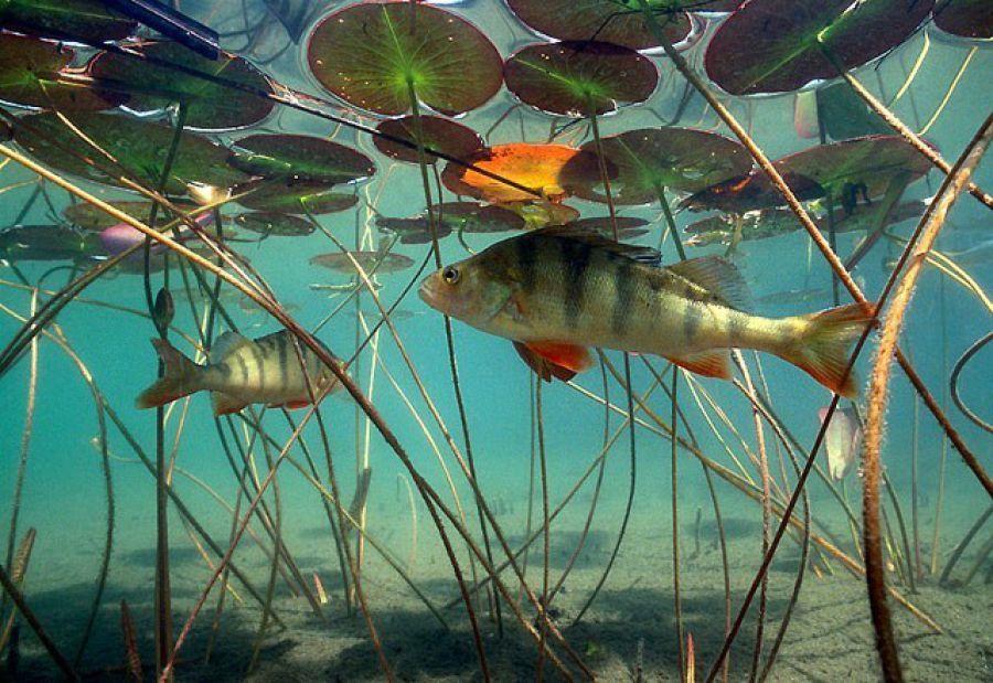 Подводный мир реки