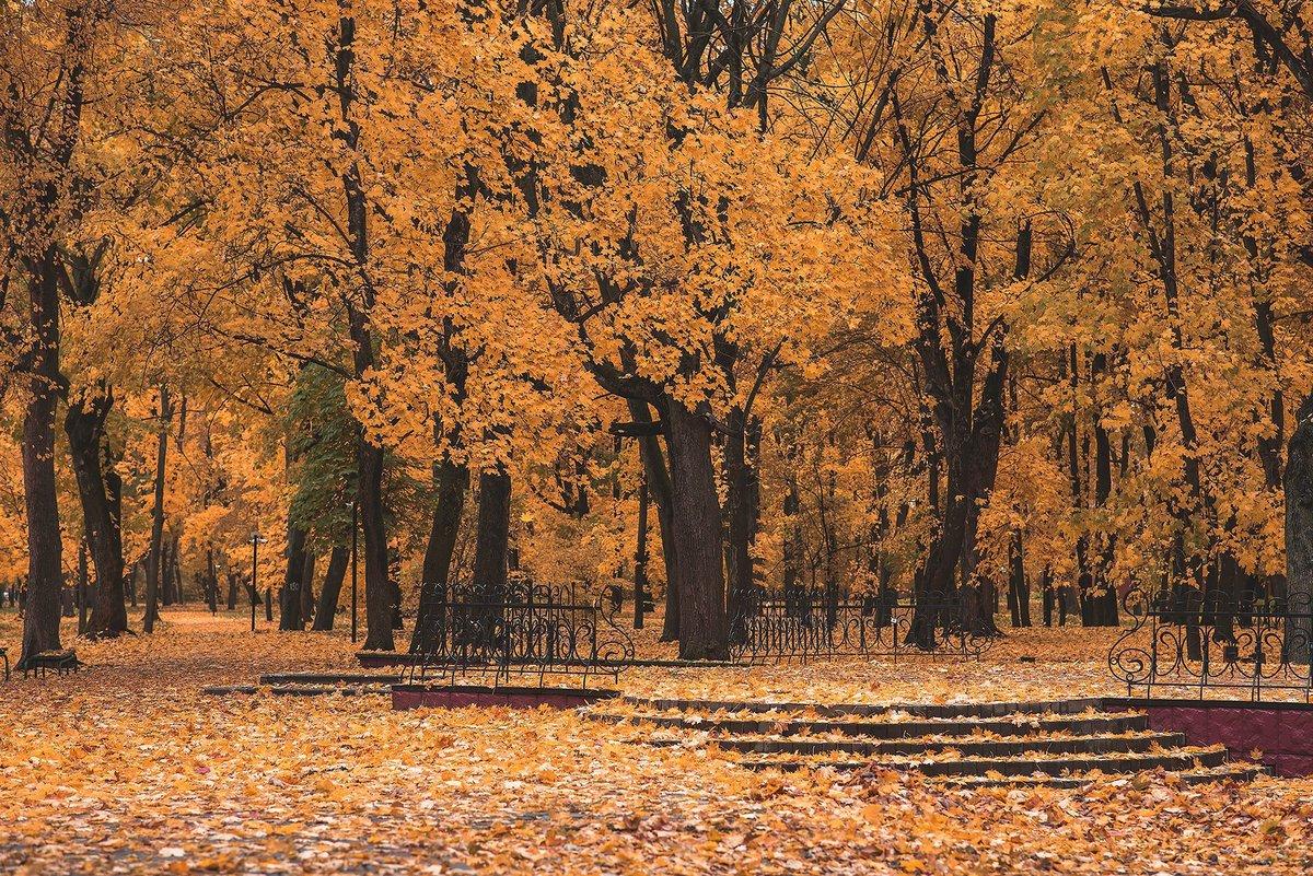Золотая осень в Тамбове. Фото Сергей Цалюк