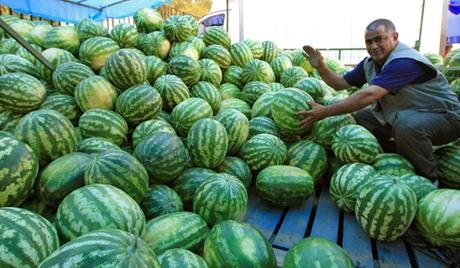 В Тамбове определили места продажи арбузов и дынь