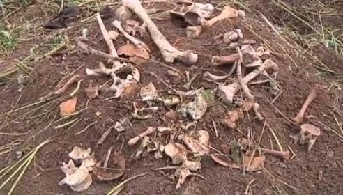 Кости, обнаруженные на участке