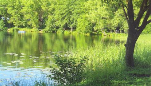 Тамбовщина заняла первое место в экологическом рейтинге России