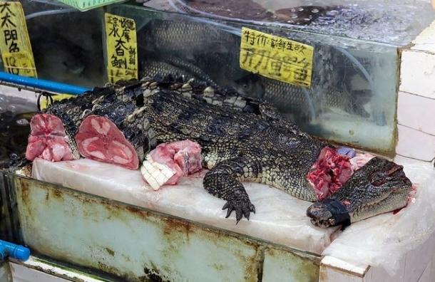 Мясо крокодила