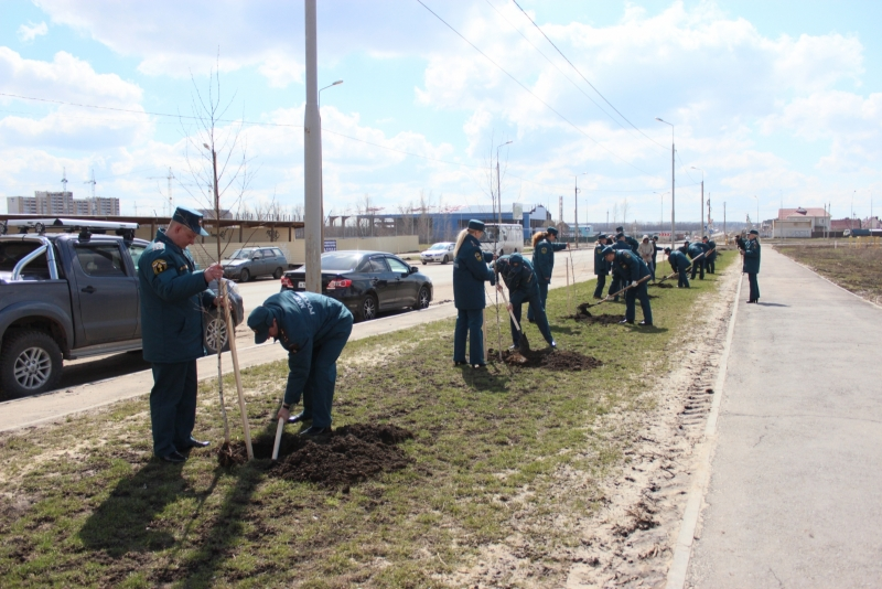 Сотрудники МЧС высаживают березовую аллею на Агапкина