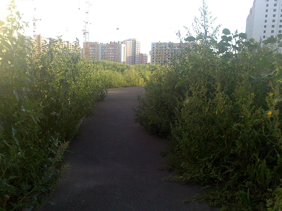 DSC_0695 (1)