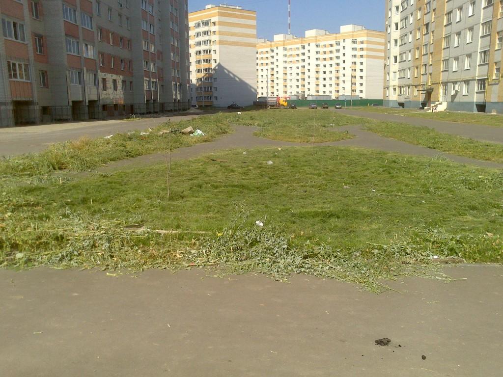 Зеленая зона на Свободной