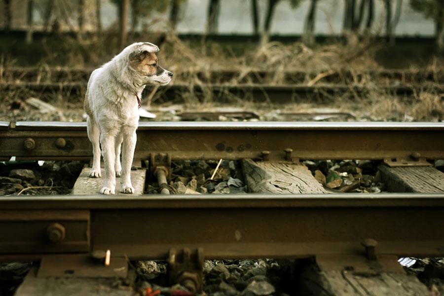 Теперь собаку можно будет взять с собой в плацкартный вагон