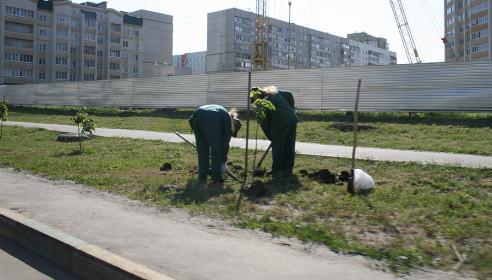 На улице Чичерина в Тамбове посадили саженцы