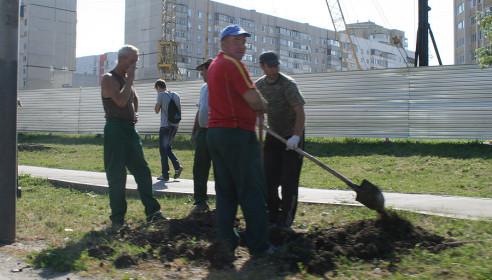 Сотрудники Зеленхоза уверены - деревья приживутся