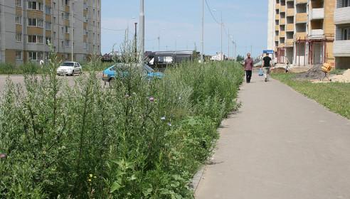 Сорняк в мкр Московский