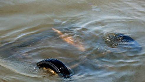 Тамбовчанка утонула в реке вместе с автомобилем