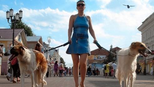 Депутаты обяжут тамбовчан убирать фекалии за своими питомцами