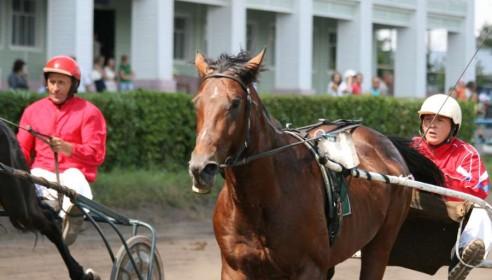 Испытание лошади на резвость