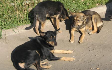 Собаки в микрорайоне Московский в Тамбове