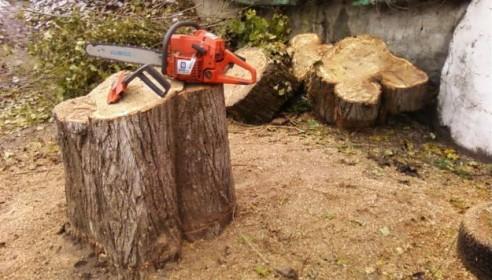 В Тамбове спилят 117 лишних деревьев