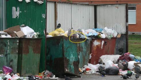 Крысы на мусорке во дворе дома Ореховая, 2,4