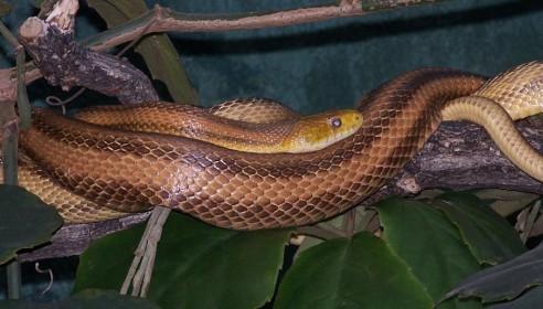 В тамбовском зоопарке пройдет змеиный конкурс красоты
