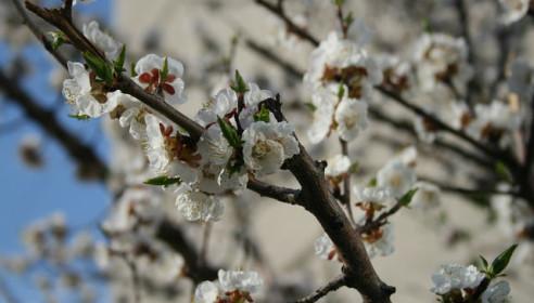 Весна в Тамбове