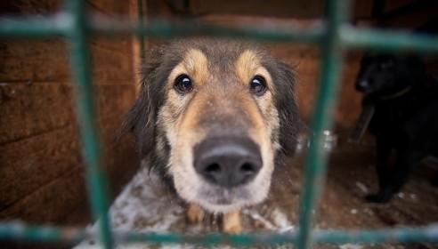 Приют для бездомных животных в Тамбове