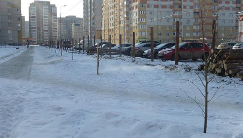 Липовая аллея на улице Победы,7