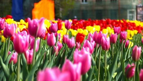Тамбов раскрасят 2 млн цветов