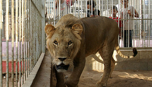 Зоопарк в Тамбове