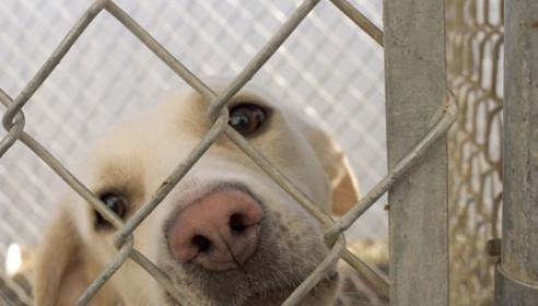 """В Тамбове узаконили работу организации помощи бездомным животным """"Доброе сердце"""""""