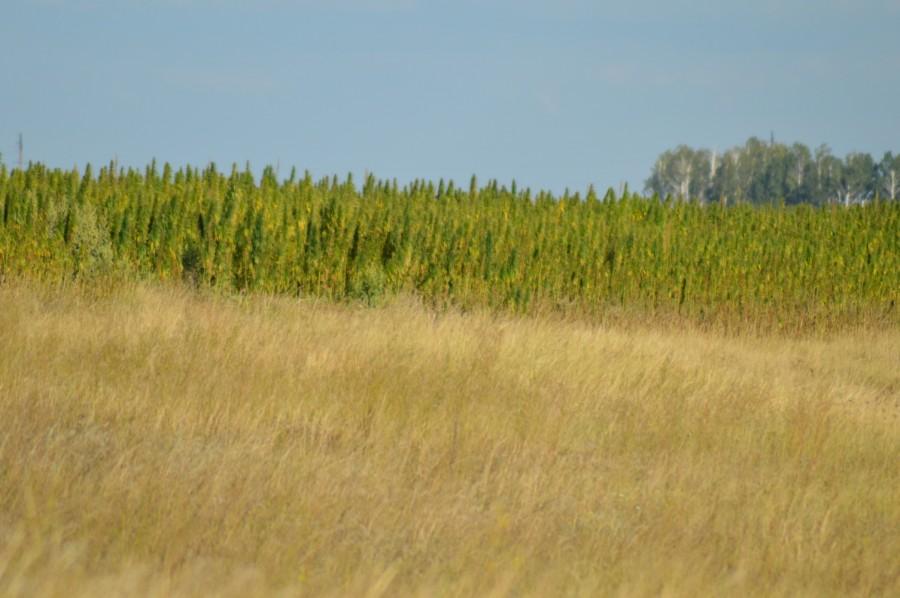 Длина поля 2.5 на 3,5 км
