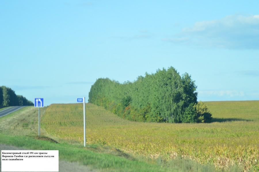 191 км трассы Воронеж-Тамбов, где расположен съезд на поле с каннабисом