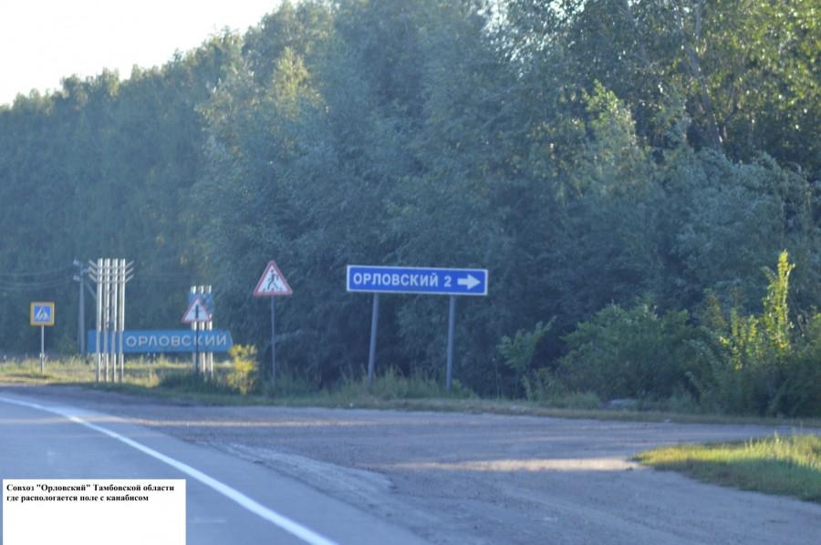 """Совхоз """"Орловский"""", именно здесь растет поле с каннабисом"""
