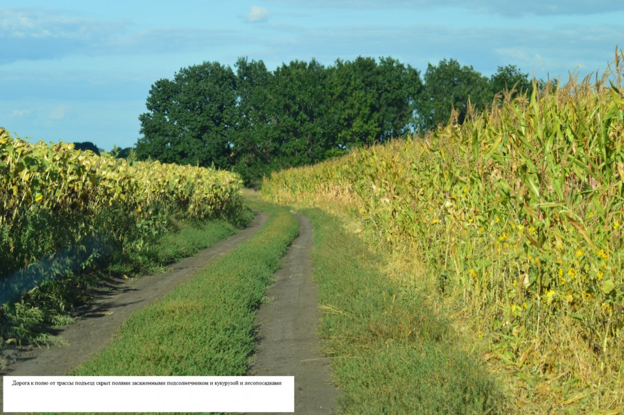 Дорога между полем