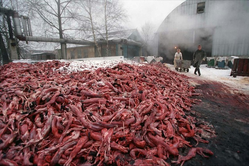 Трупы убитых пушных животных