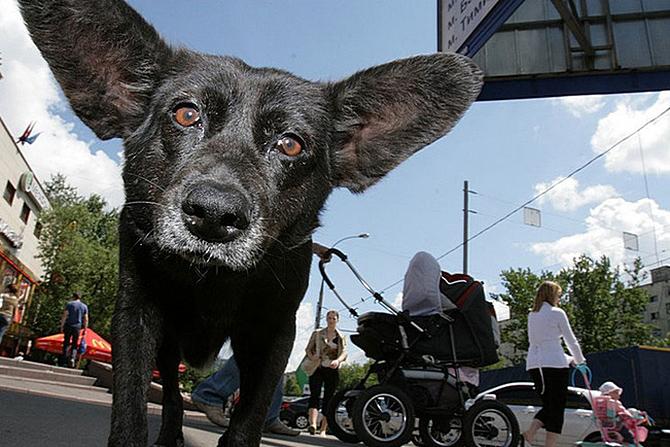 Бездомные животные в Тамбове
