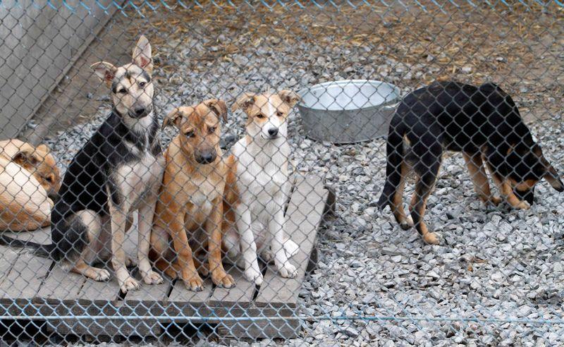 Приют для собак в Тамбове