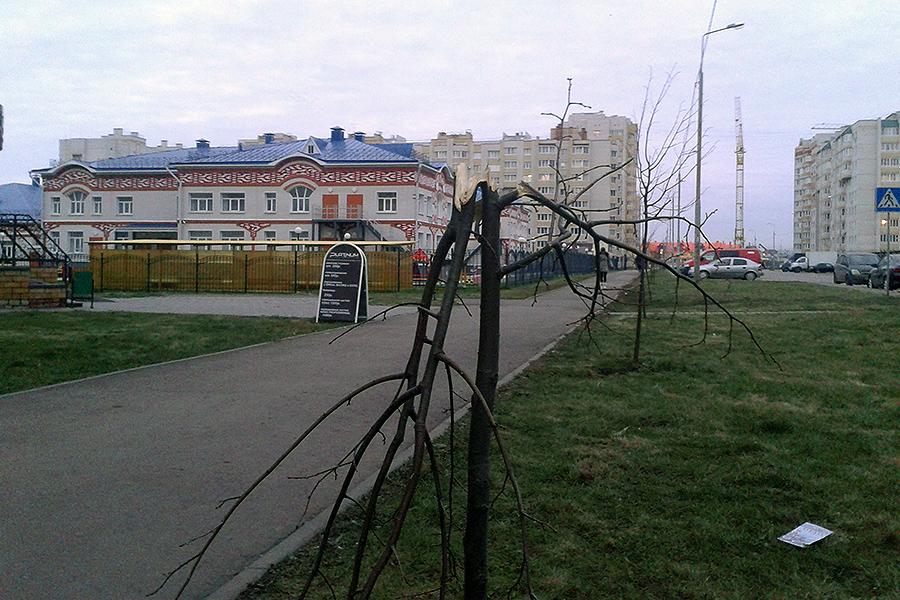 Поломанные деревья на улице Победы
