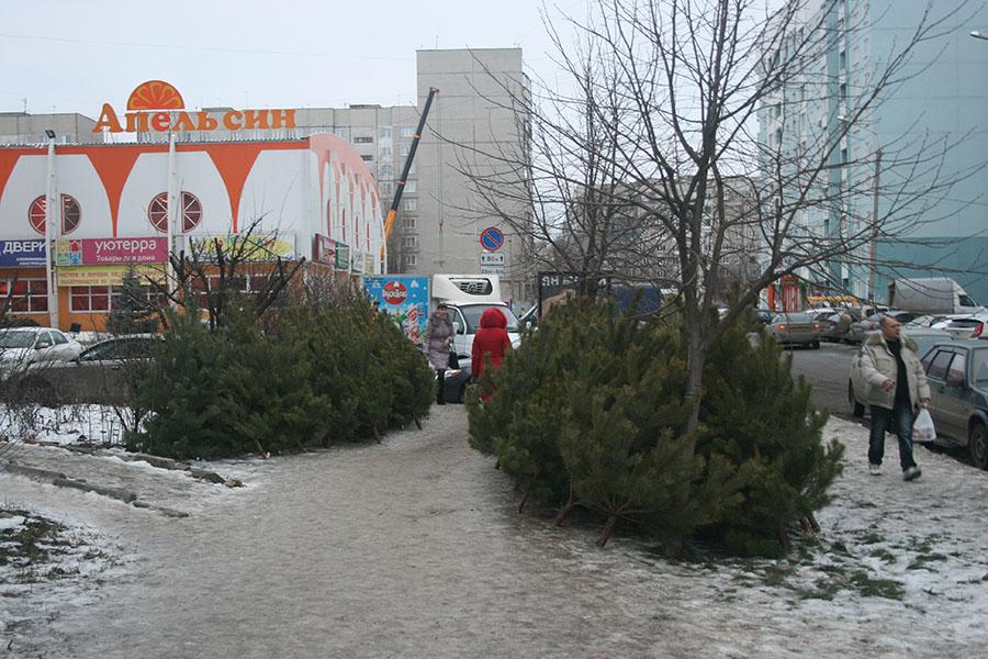 Торговля елками у ТЦ Апельсин