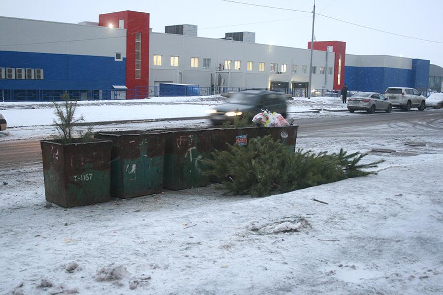 Тамбовчане стали выбрасывать елки