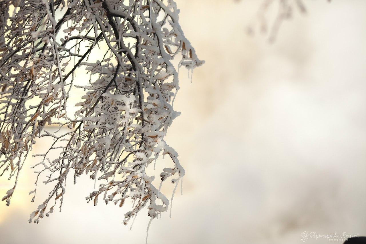 Деревья во льду