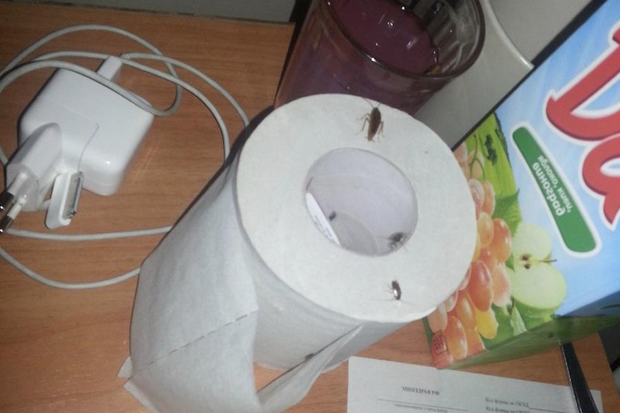 Тараканы в больнице
