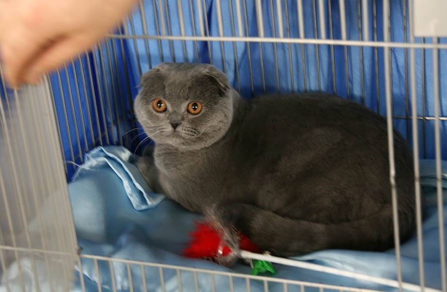 Выставка кошек в Тамбове