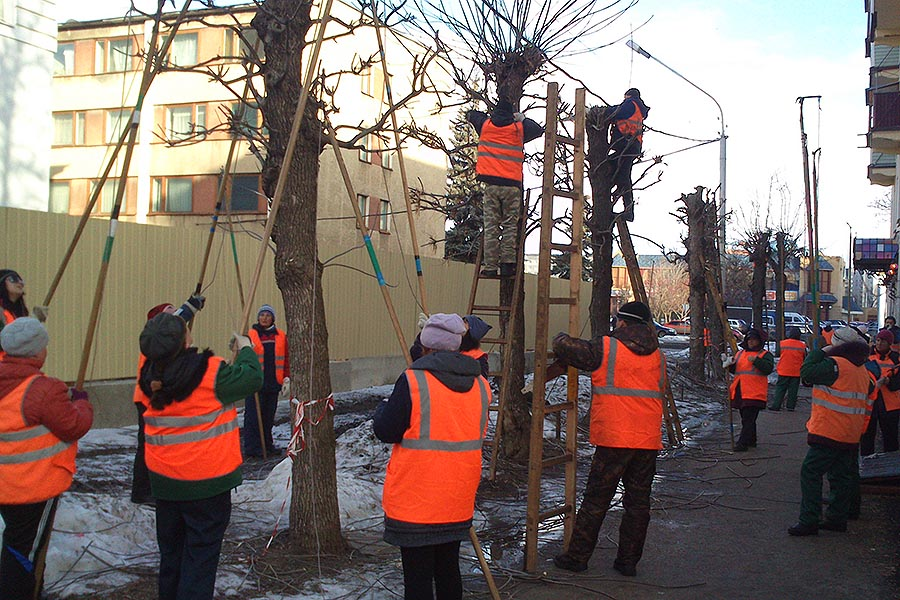 Коммунальщики Тамбова, обрезка деревьев