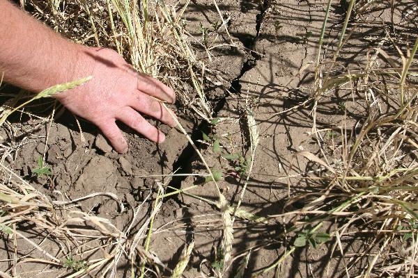 Засуха в 2014 году