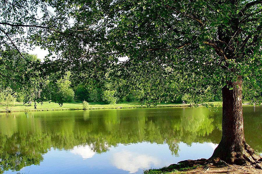 Парк с прудом в Радужном
