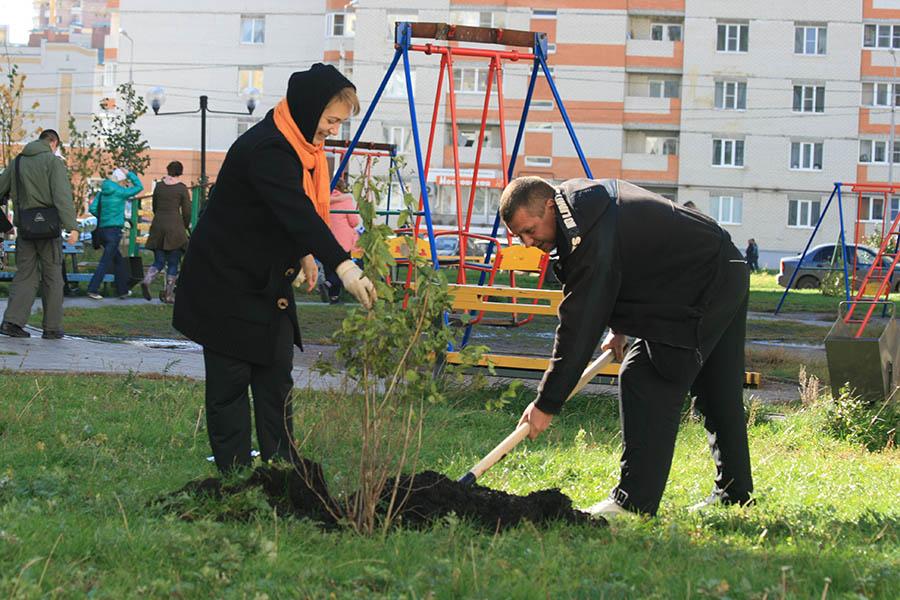 Посадка деревьев во дворе на Северо-Западной,4