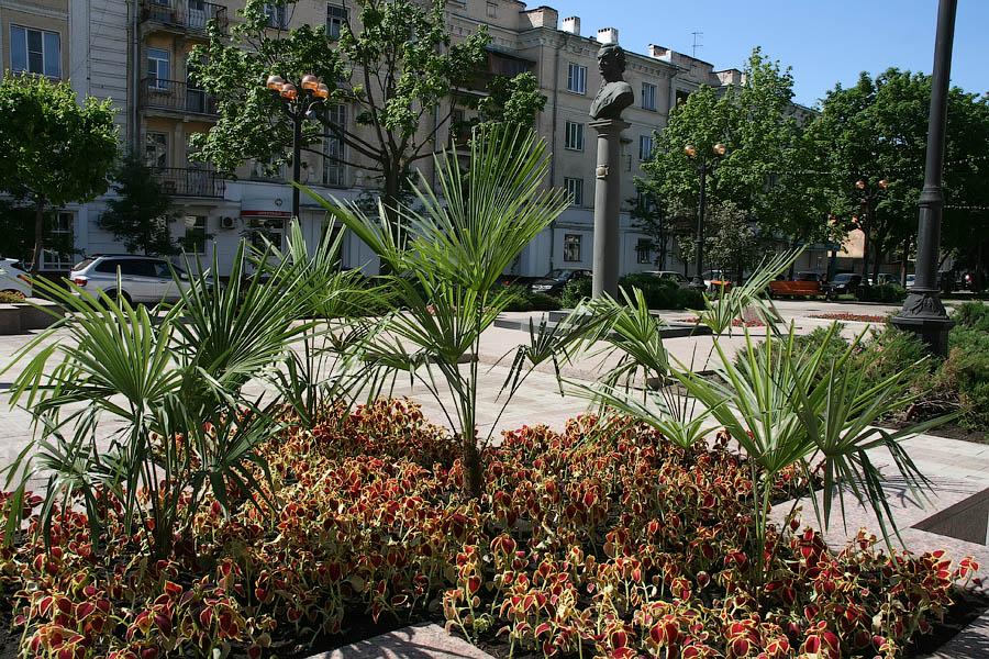 Пальмы в центре Тамбова