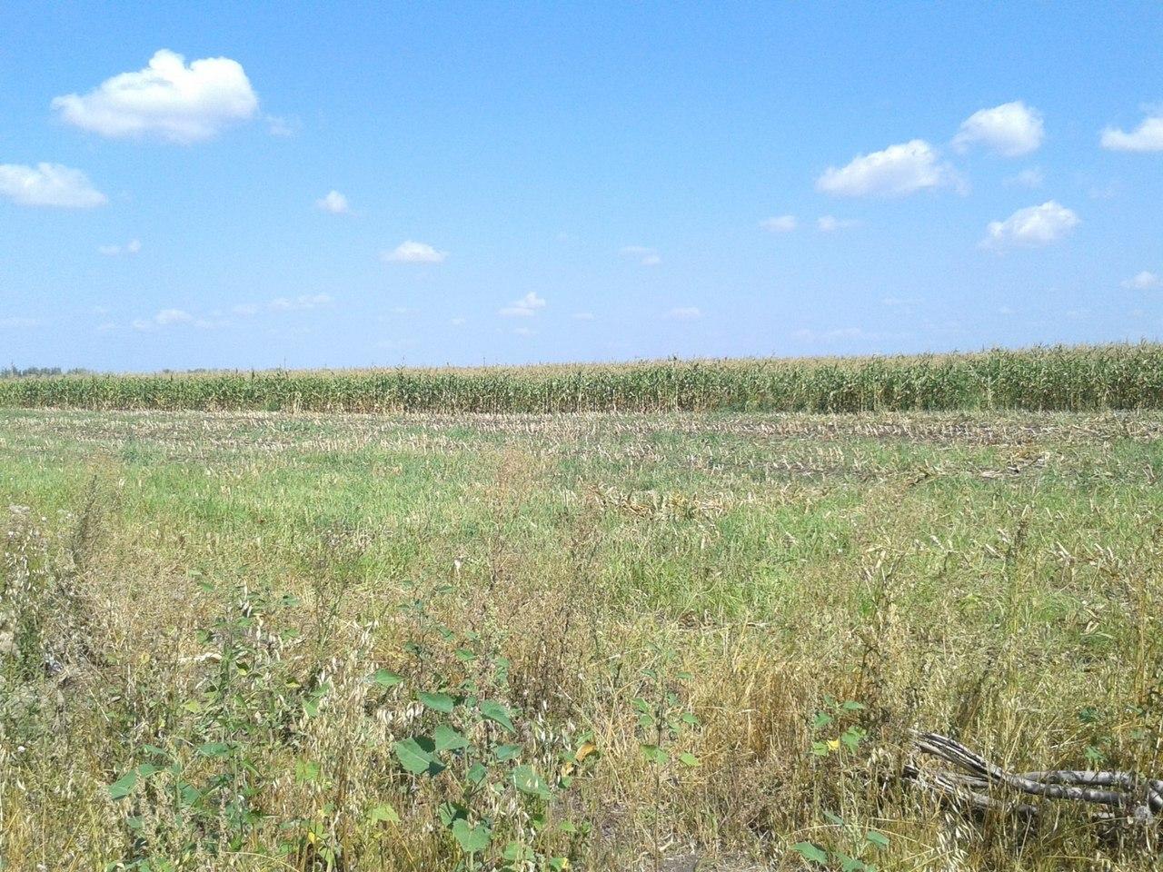 Уборка кукурузы в Майском