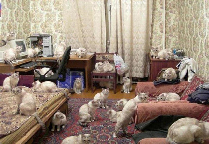 389151__cat-mischief_p
