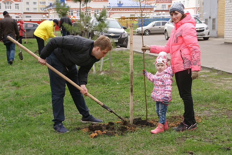 Посадка деревьев во дворе на Глазкова